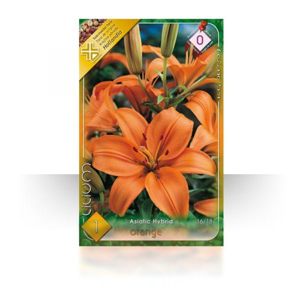 Ázsiai liliom narancssárga virághagyma